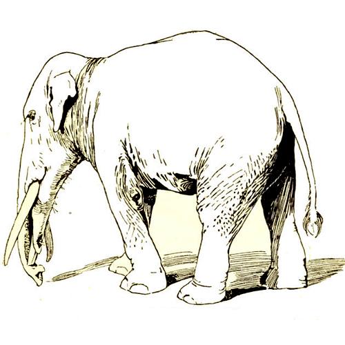 Снова о слонах в Книге Мормона